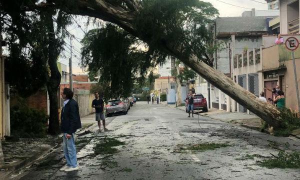 Anderson Gores/Divulgação