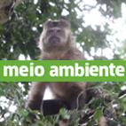 Meio Ambiente Diário do Grande ABC - Notícias e informações do Grande ABC: Santo André, São Bernardo, São Caetano, Diadema, Mauá, Ribeirão Pires e Rio Grande da Serra